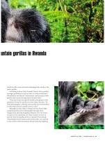 Gorillacover3
